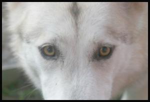 dakota-eyes
