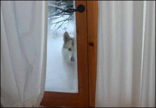 dakota winter window