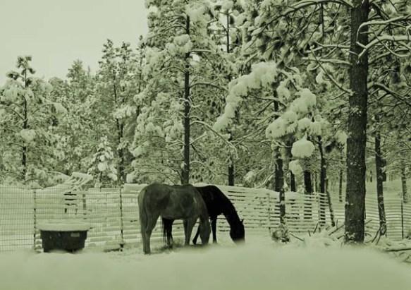 horses:snow oct 13