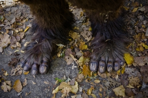 sasquatch feet