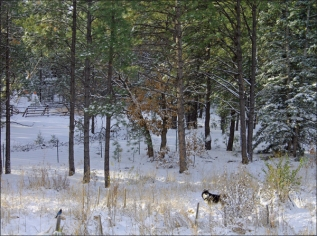 shiloh:blue jay first snow