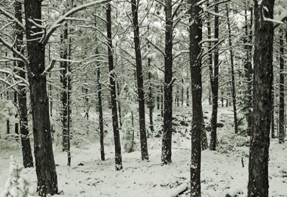 snow trees oct 13