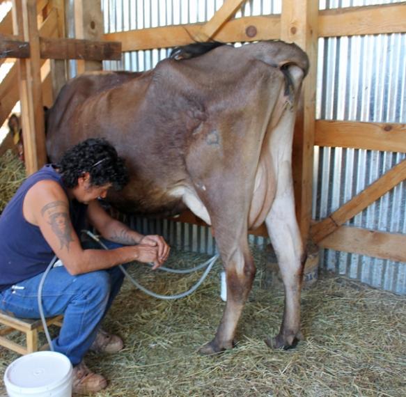 jody milk june '14