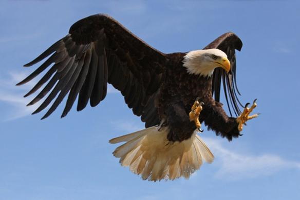 shutterstock_eagle