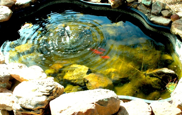 fish pond april 16