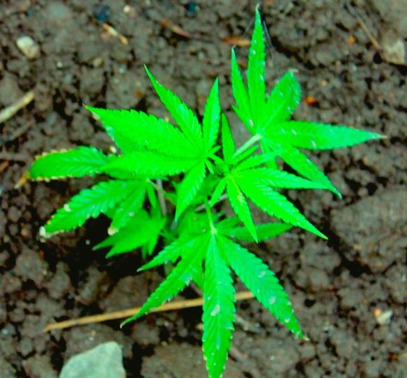 jody's mota plant beginning