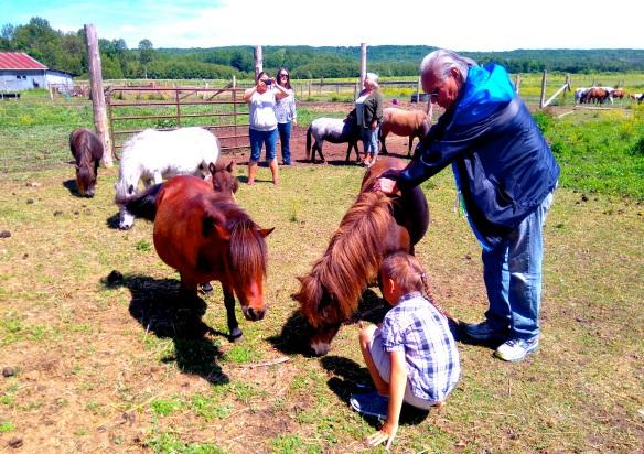 noel horse 2.jpg