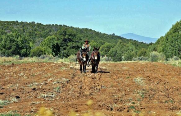 mule-team-beanfield