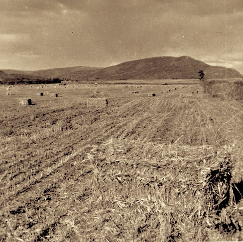 ruth-harvest