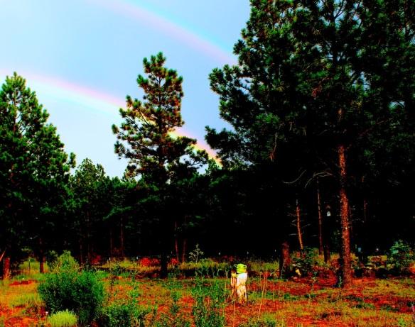 rainbow-81216