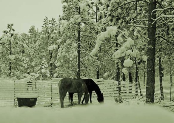 horsessnow-oct-13