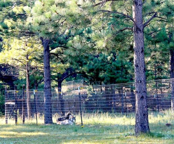 shisakina-enjoying-the-morning
