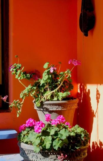 geraniumssunroombright