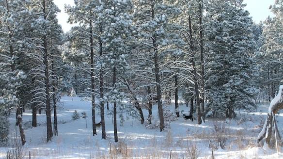 los-lobos2longshot-snow