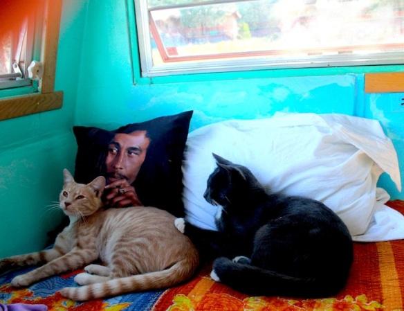 kittens:bob marley