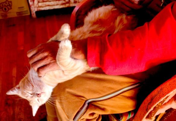 os cat massage 1
