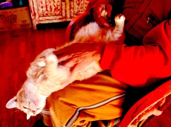 oso cat massage 2