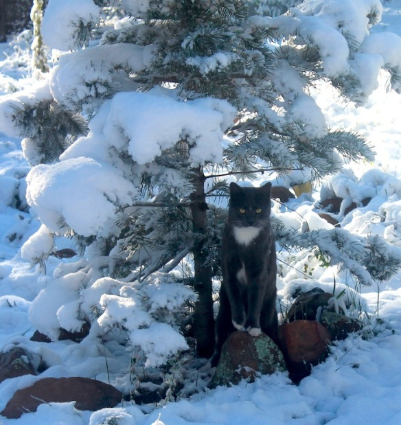 syl poses in snow