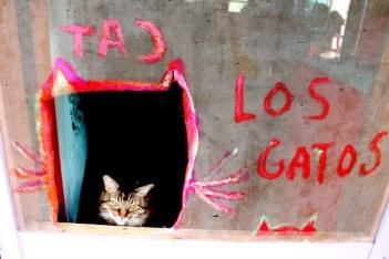 maggie:los gatos